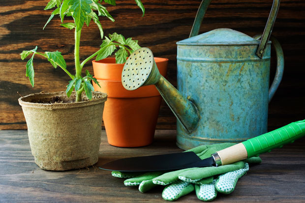 Garden hygiene