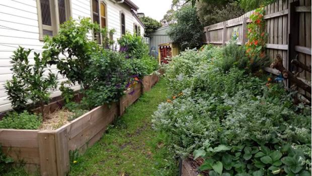 The Hills Food Frontier garden raised beds