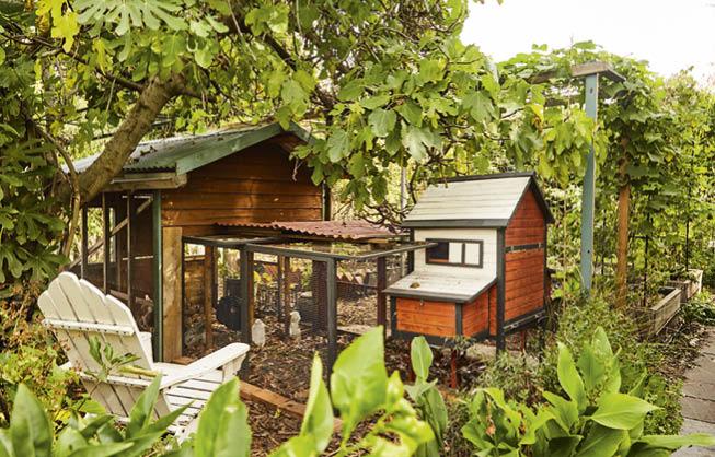 126 Jian Liu's henhouse by Kirsten Bresciani