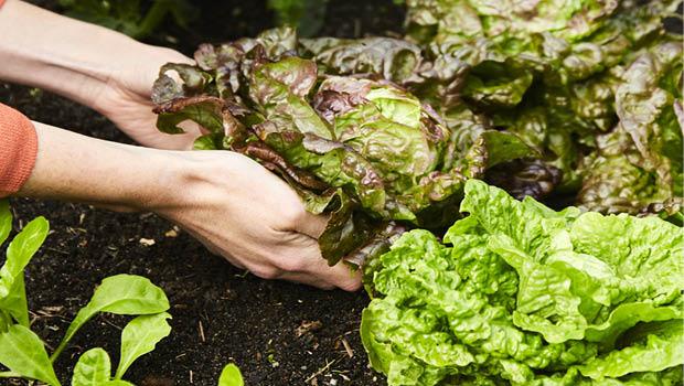 Nutrient-dense soil by Kirsten Bresciani