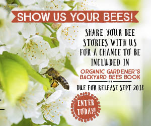 Backyard bee book comp