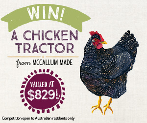 126 chicken tractor competition