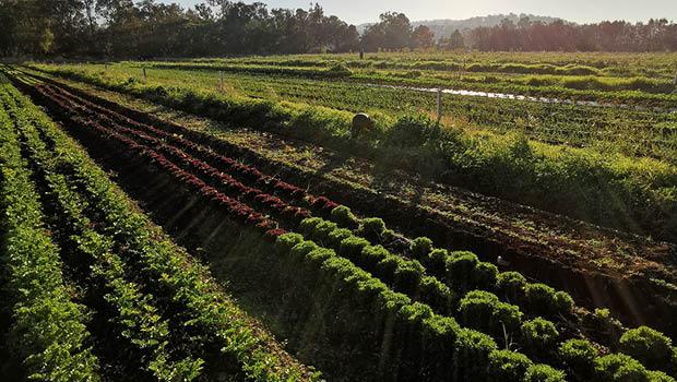 Roly Poly Farm, Harvey, WA