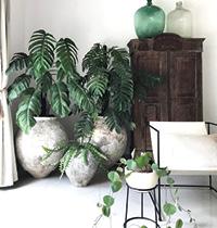 124 Indoor plants by Craig Miller-Randle