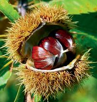 126 Chestnut by Gap Photos