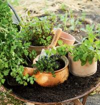 127 Herbs in pots by Kirsten Bresciani