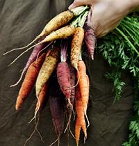 124 Carrots by Kirsten Bresciani