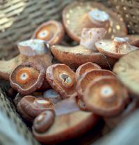 Foraging mushrooms, Alison Pouliot