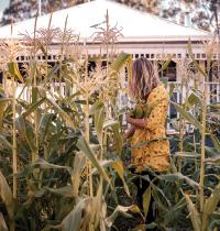 120 Jade Miles and her corn by Karen Webb