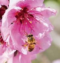 111 Pollination