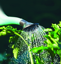 Watering tips for the summer months