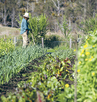 Matthew Evans farm