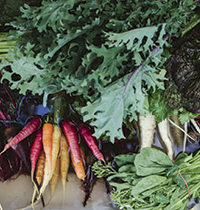 Lentil Purbrick colourful veg