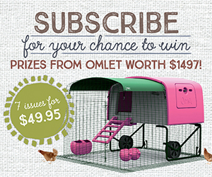 Omlet subs prize