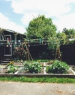 Urban vegie patch photo by Megan Young