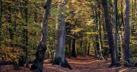 Trees can have a positive impact on our blood pressure.