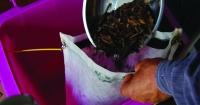 Adding compost to tea bag