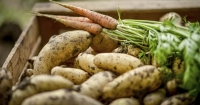 Potatoes and carrots are Peter Cundall's pick of the vegie bunch.