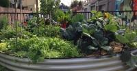 community garden, urban gardening