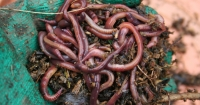 Worms help the soil