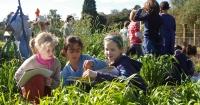 Australian Organic Program school garden