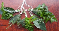 Bunches of herbs