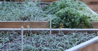 Frosty Veg Garden