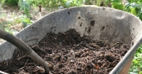 Wheelbarrow with compost