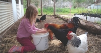 Kids and chooks make great friends