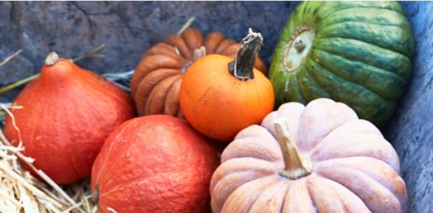 Pint-sized pumpkins