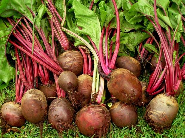Grow The Best Organic Beetroot Organic Gardener Magazine Australia