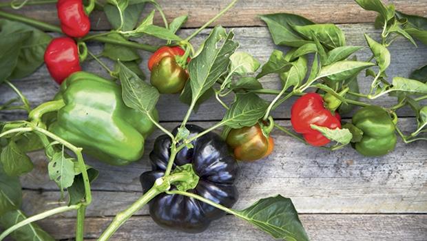 Super fruit: capsicums