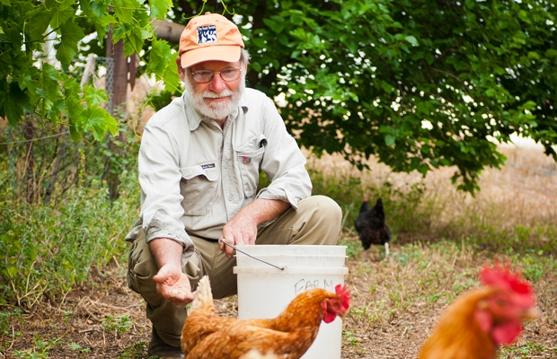 Graham Brookman and chickens