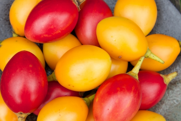Bright red and yellow tamarillo