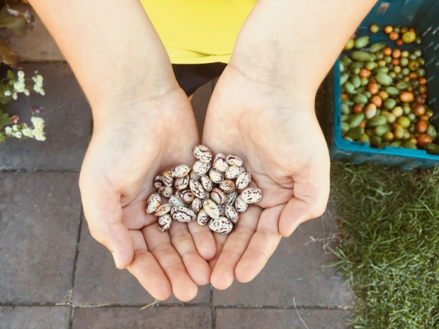 seed security at risk