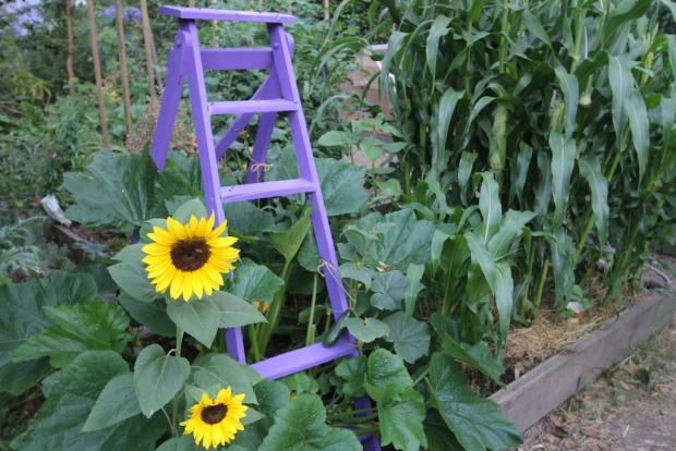 Purple ladder climbing frame