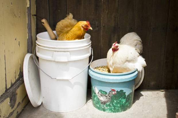 Keep pests out of your feed bins!