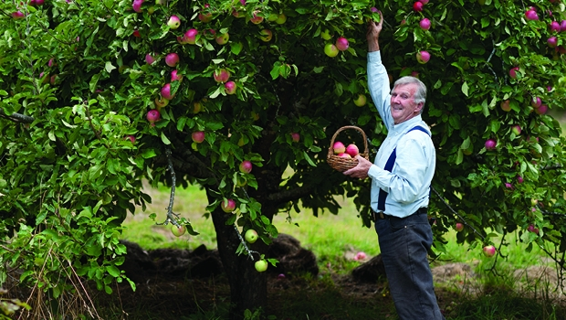 Peter Cundall harvests apples