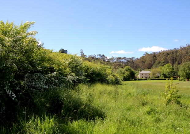 Old Wesleydale Hedge