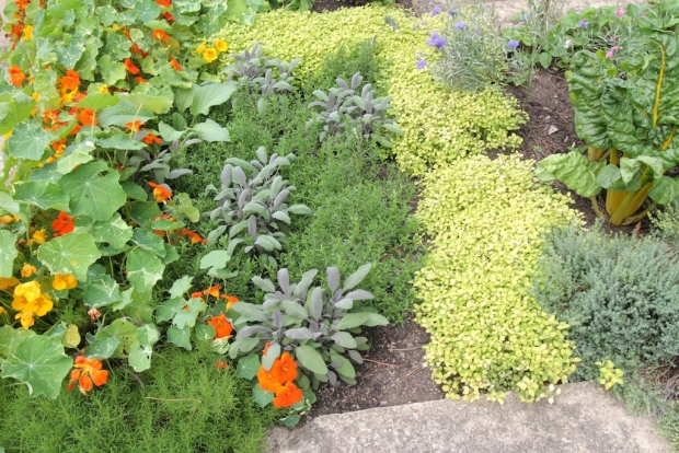 Herb garden basics organic gardener magazine australia for Gardening 101 australia