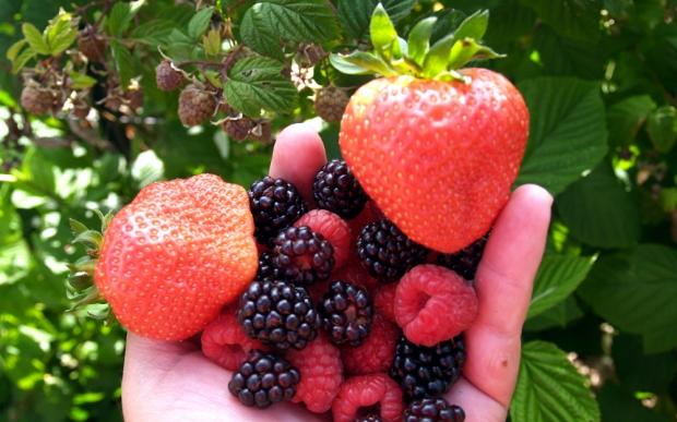Berry Feast