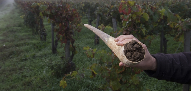 Biodynamic preparation