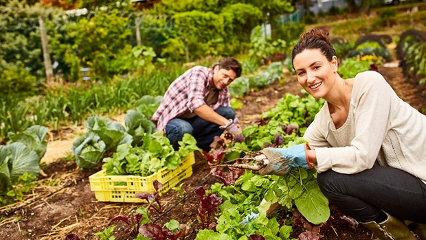 Farming the suburbs