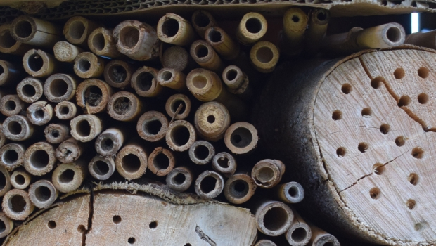 Bee hotels can be made from a mix of wood, stems, straws, mud and sand.