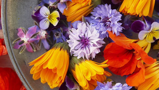 From garden to plate – borage, heartsease, calendula, nasturtiums, dill and cornflowers.
