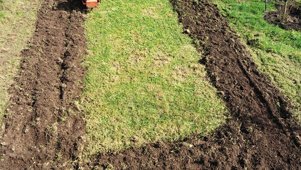 A rotary hoe is a quick way of converting turf to garden beds.