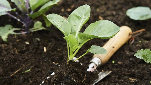 We can store carbon in our soil and so help combat climate change.