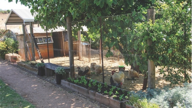 chook pen setup Hi i am trying to set up a chook pen at the centre where i work one of the prerequisites is a care plan for each chook (not joking) can anyone help with what i have to do and i would love to hear from other dts who have done the same thing.