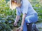Annabel Langbein harvesting strawberries