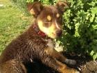 'Pablo' puppy